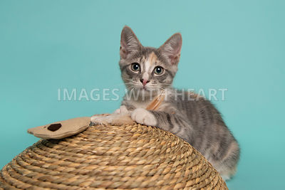 Playful kitten laying on scratcher