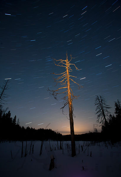 Dead tree and the stars