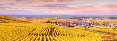 Sunset over the vineyards of Oger, Champagne Ardenne, France