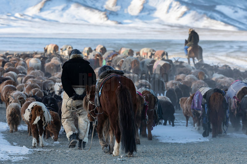 Migrating Herd and Horsemen