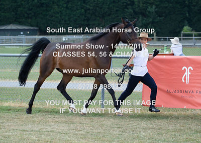 South East Arabian Horse Group Summer Show 2018