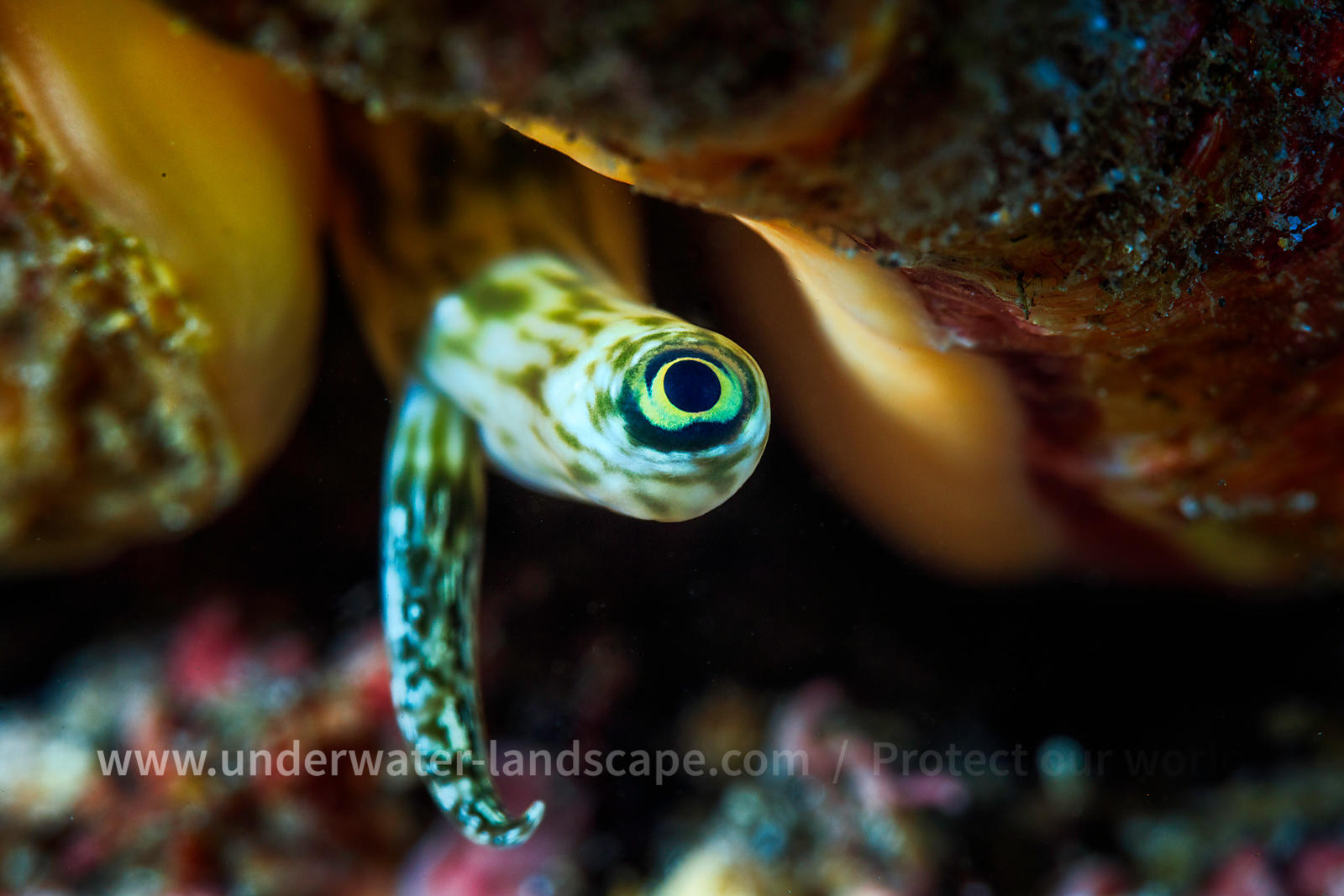 Shell Eye picture