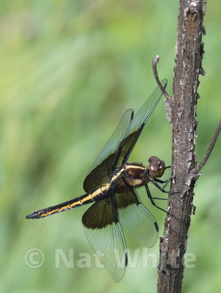 Dragon_Fly_-4934_May_29_2017_
