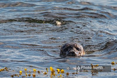 SEAL 01A - Common seal