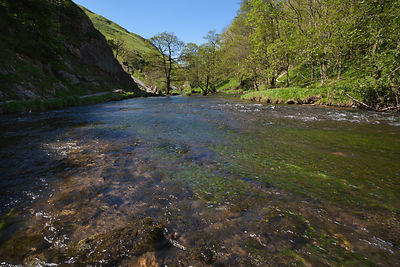 In the river at Dovedale