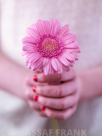 Female hands holding a flower