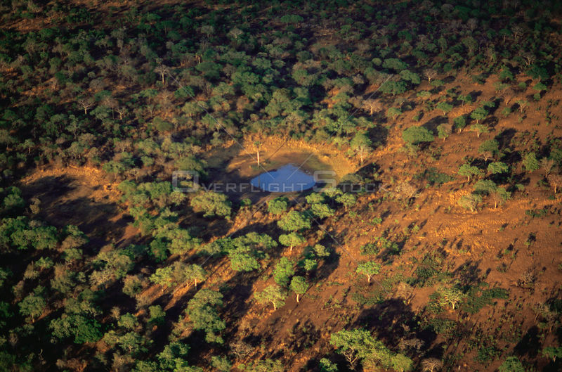 Aerial view of dried waterhole in woodland bush during dry season, Katavi National Park, Tanzania