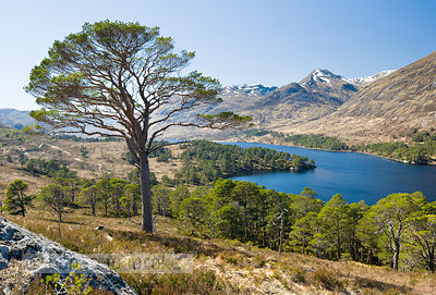 Glen Affric - BP2983