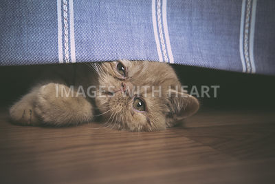 Cat peeking out under drapery