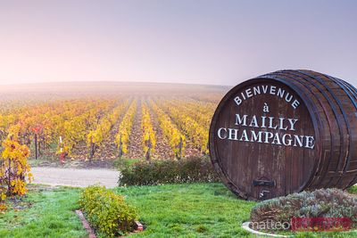 Vineyards, Mailly Champagne, Champagne Ardenne, France