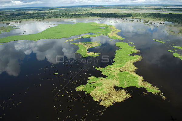 Aerial view of floating meadows of grass in the Beni floodplain during the summer 2008 flood of the Mamoré River. South of Tr...