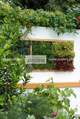 garden designer, Mini potager, Mini Vegetable garden, Salad, Small garden, Urban garden, Digital, Foliage wall, Green wall, Vegetation wall, Wall decoration