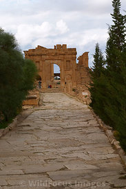 On the Decumanus looking towards the Antonine Gate through to the forum and the 3 temples. Sbietla Tunisia; Portrait