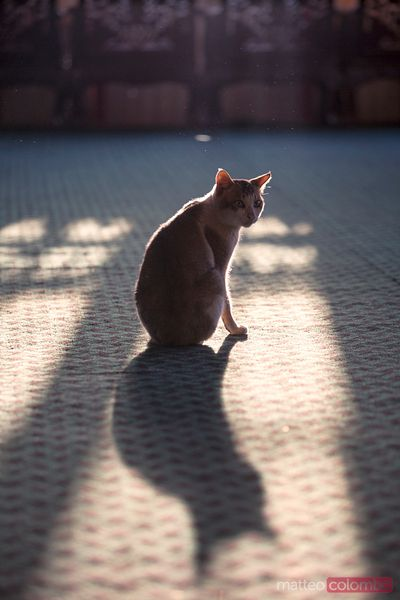 Cat sitting near window, casting a shadow on the floor