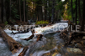 Forest stream near Tioga Pass