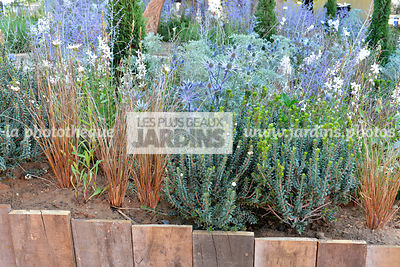 Massif fleuri : Carex buchananii, Eryngium bourgatii, Paysagiste : Mike Harvey (Arun Landscapes), Hampton Court, Angleterre