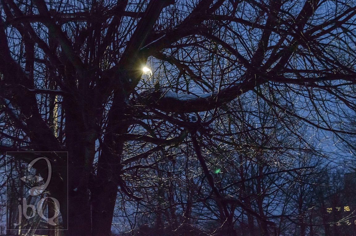 Night Streetlight through icy tree limbs