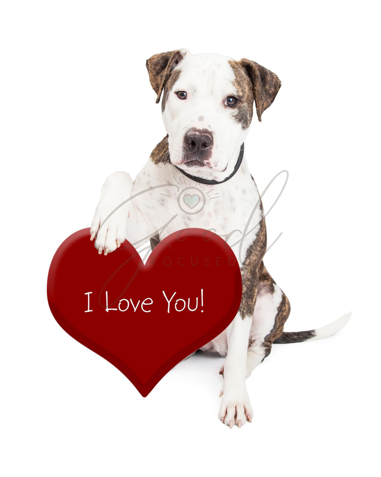 Pit Bull Dog Love You Heart