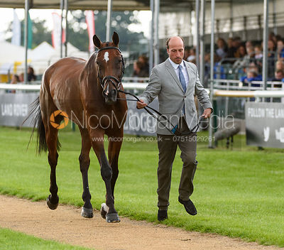 Tim Price and NZB CAMPINO at the trot up, Land Rover Burghley Horse Trials 2018