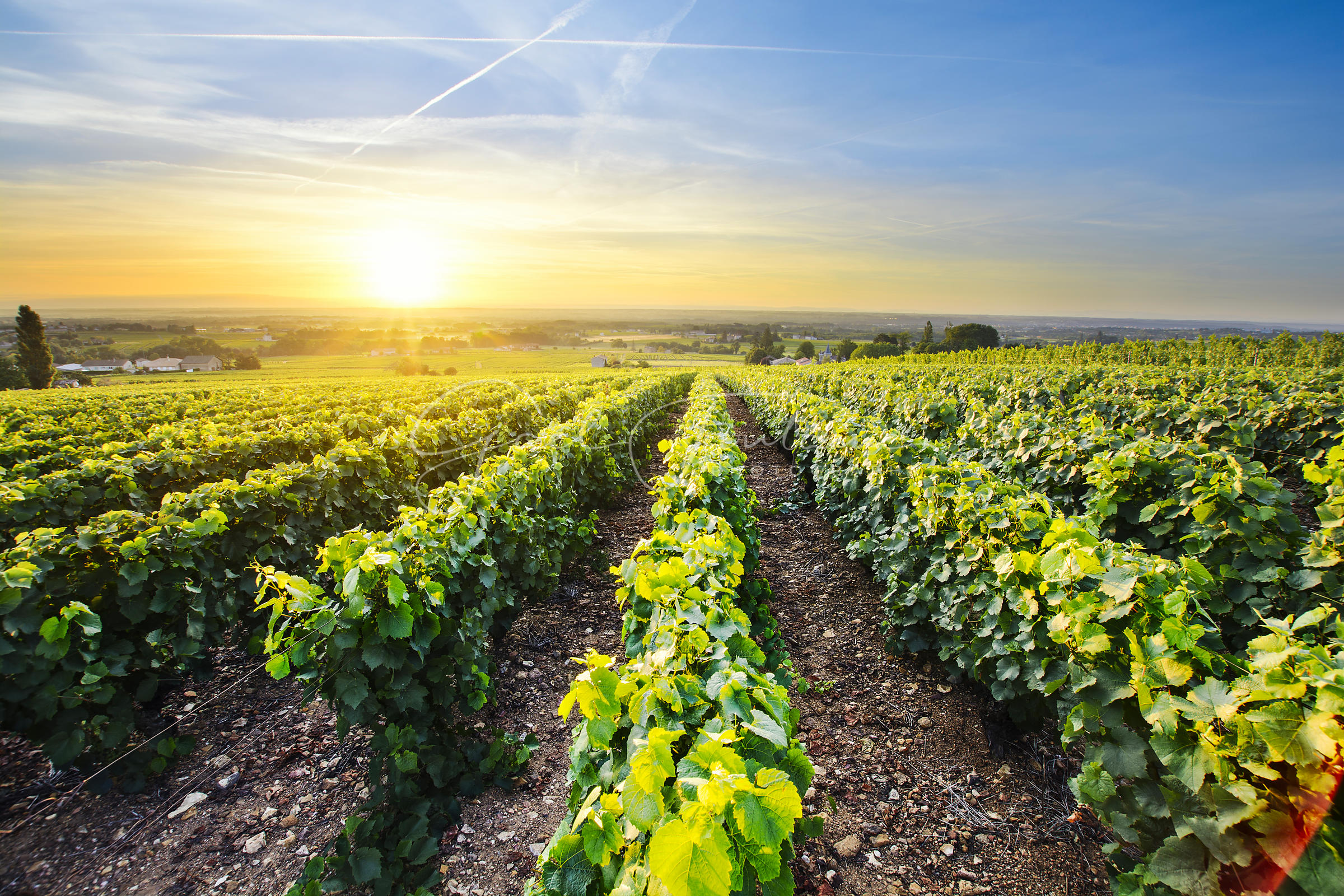 Sun_is_rising_over_vineyards_of_Beaujolais_France_-_6000_x_4000