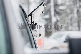 siberian husky sled dog in truck looks out window at snow