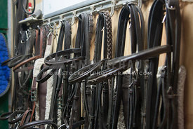 still life of bridles in a tack room