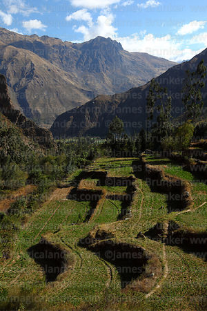 Inca terracing in Patacancha valley near Ollantaytambo, Sacred Valley, Peru