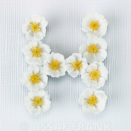 The letter H written in white Roses