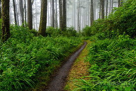 Forest Trail | Marin County, CA