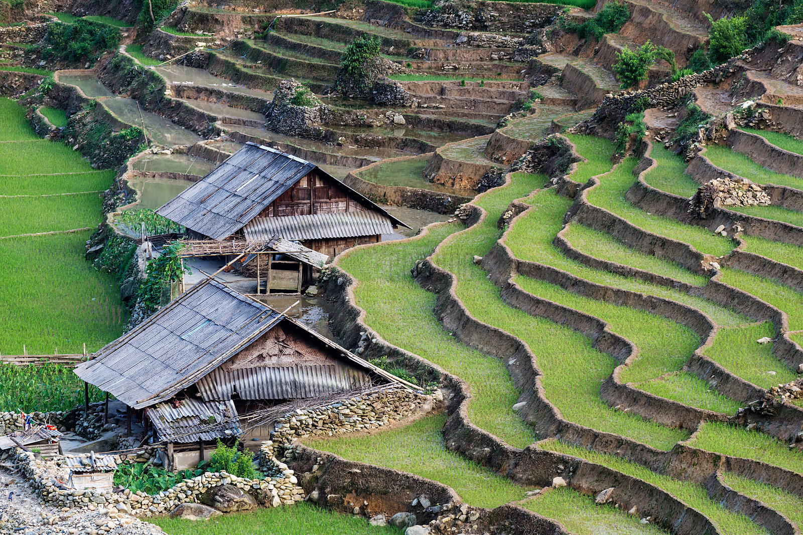 Elevated View of Rice Paddies and Settlements along a River