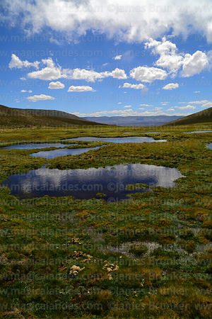Bofedal wetlands near Abra Calderillas pass, Cordillera de Sama Biological Reserve, Bolivia