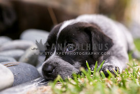 puppy laying on rocks