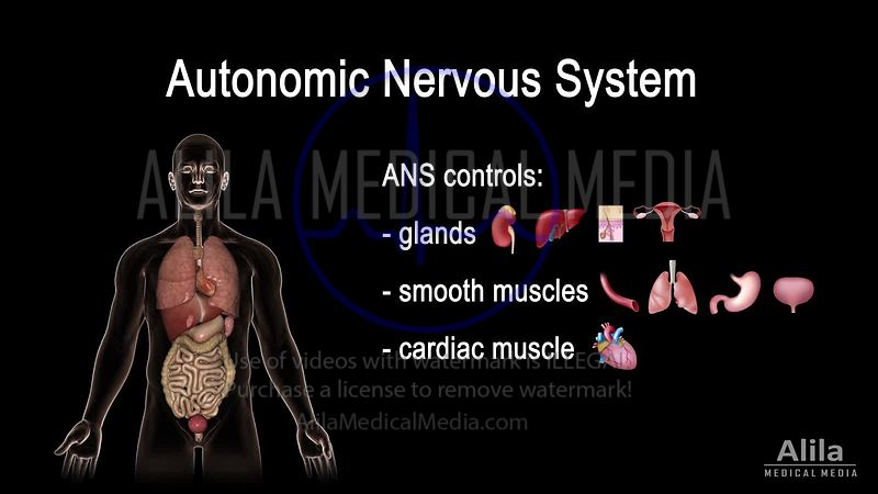 Autonomic nervous system NARRATED animation