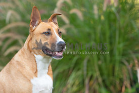 close up of brown and white pit bull mix sitting in front of green plant