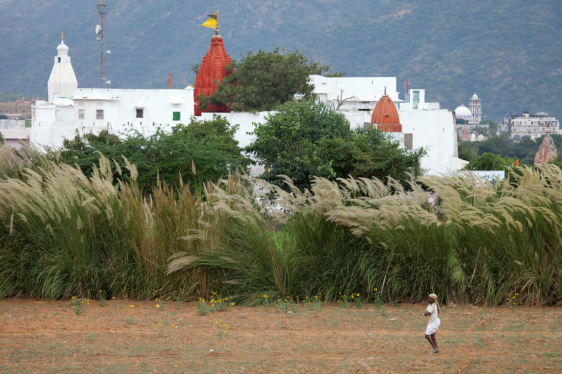 Tall grasses in front of a Hindu temple in Pushkar, Rajasthan, India