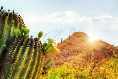Arizona Desert Scene With Mountain and Cactus