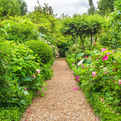Pathway through garden
