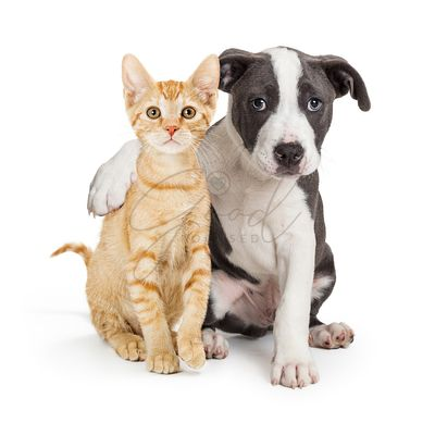 Puppy With Arm Around Cute Kitten
