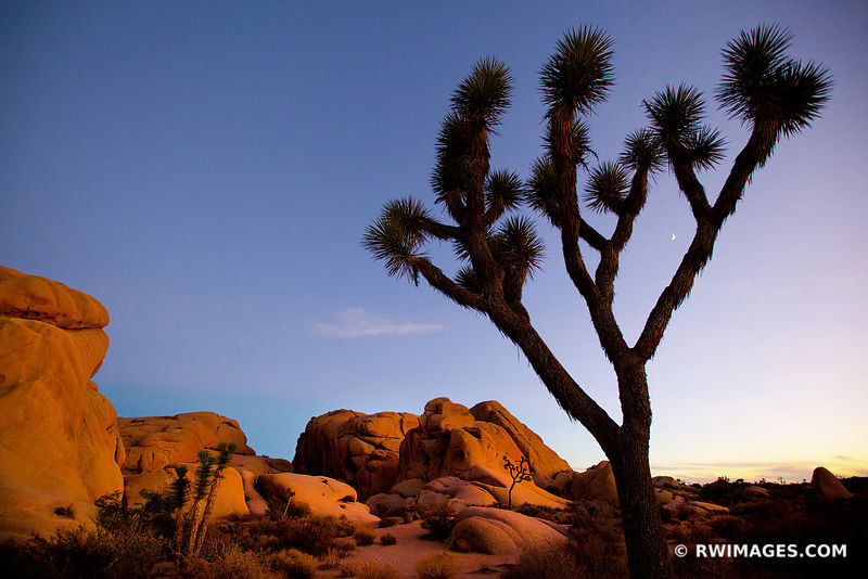JUMBO ROCKS JOSHUA TREE NATIONAL PARK AMERICAN SOUTHWEST HIGH DESERT LANDSCAPE