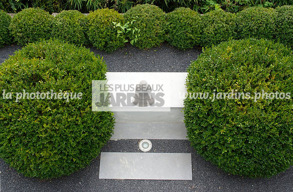 Buxus sempervirens (Buis), Conception et réalisation :  James et William Hartley. English Garden Group