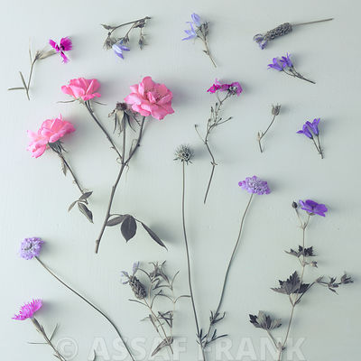 Mixed flowers on colored background