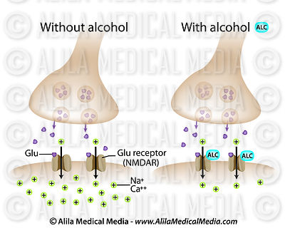Alcohol on glutamate synapse labeled