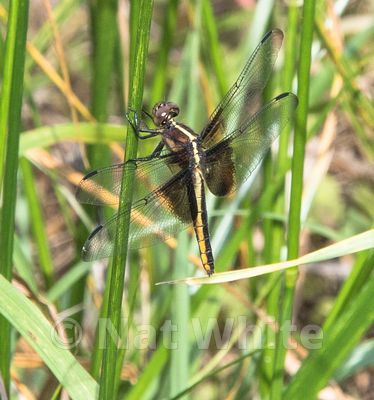 Dragon_Fly--May_29_2017-