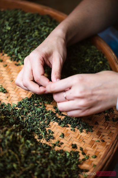 Woman preparing tea leaves, Shanghai, China