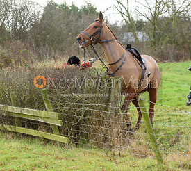 David Manning fallng at a hedge near the meet - The Belvoir Hunt at The Wolds Farm 3/12