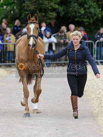 Clare Abbott and EURO PRINCE - First Horse Inspection, Mitsubishi Motors Badminton Horse Trials 2014