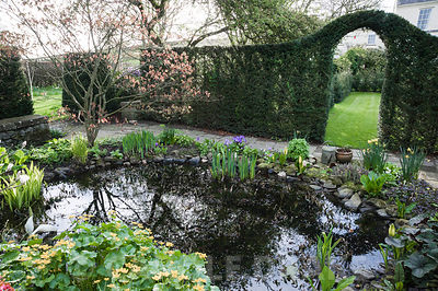 Small pond surrounded by Lysichiton americanus, irises, marsh marigold, Caltha palustris, primulas and an acer. Summerdale Ho...