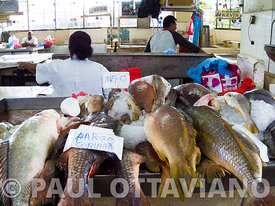 Fish Market | Paul Ottaviano Photography