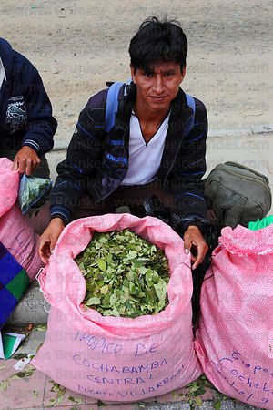 Coca grower from Chaparé region with coca leaves ( Erythroxylum coca ) at an event promoting traditional uses of the coca lea...