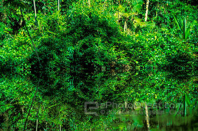 Jungle River Reflections